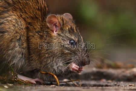 ambiente animal animais praga animais selvagens