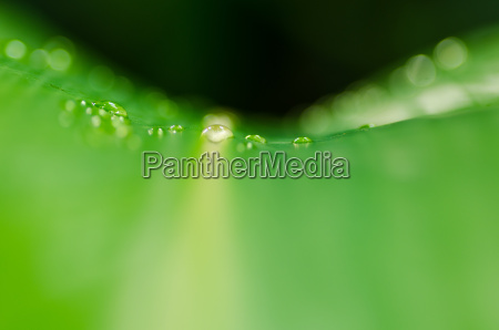 folha ambiente queda gotas de agua