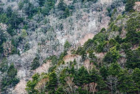 folha ambiente arvore topo inverno madeira