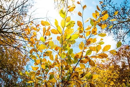 belo agradavel folha ambiente cor projeto