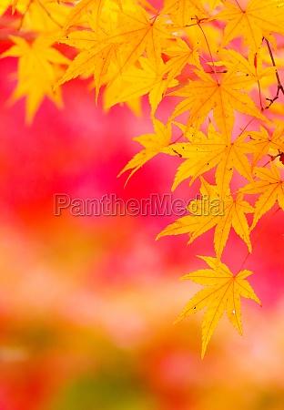 folha arvore parque jardim espaco madeira