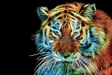 cabeca abstrata do tigre