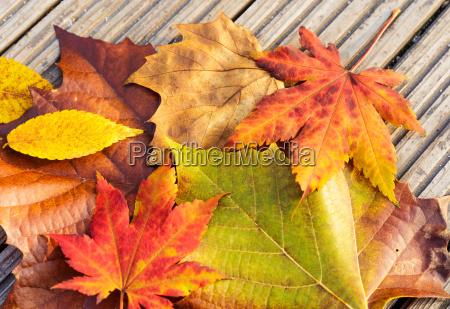 fechar folha madeira marrom dourado seca