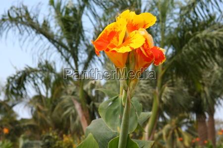 flor, planta, lindas flores, inflorescência, florescer, flores - 10820616