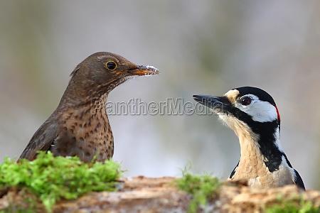 ambiente animal passaro animais passaros natureza