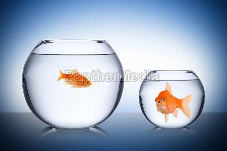 conceito inveja social peixes