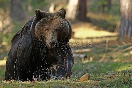 animal urso animais
