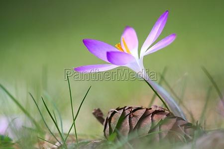ambiente flor planta lindas flores inflorescencia