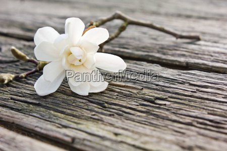 tabela madeira marrom flor lindas flores