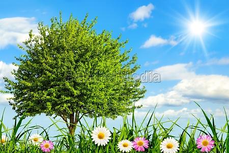 idyllic meadow with blue skies
