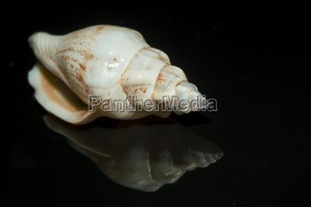 caracol concha invertebrados habitacao agua salgada