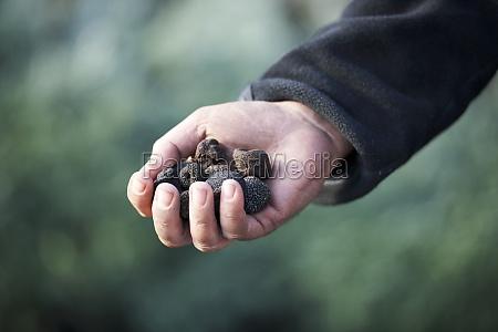 food aliment hand hands single black