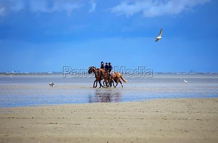 cavalo praia beira mar da praia