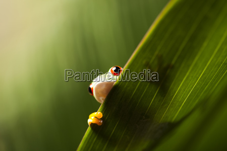 close up animal animal de estimacao