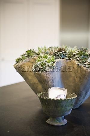 arranjo de plantas contemporanea na bancada
