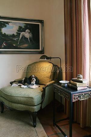 cachorro de estimacao sentado na cadeira