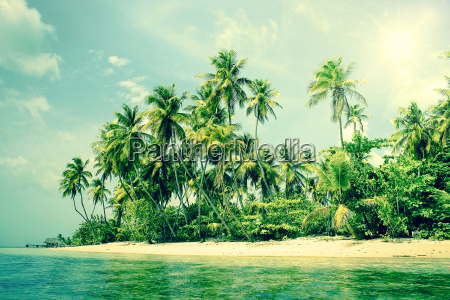 tropical island with palm trees on