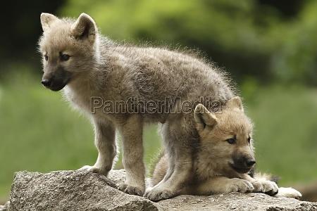 animal animais irrelevante minusculo pequenino pouco