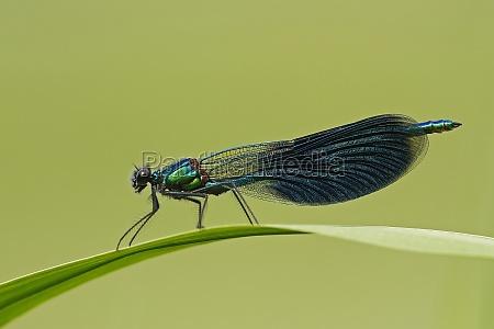 folha ambiente folhas libelula libelulas natureza