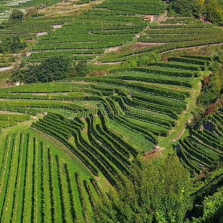 topo verde austria vinhas europa parede