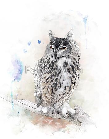 imagem aquarela de coruja