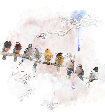 arte animal passaro pintura ilustracao aquarela