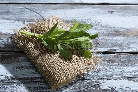 verde mediterranico sabio cos ervas