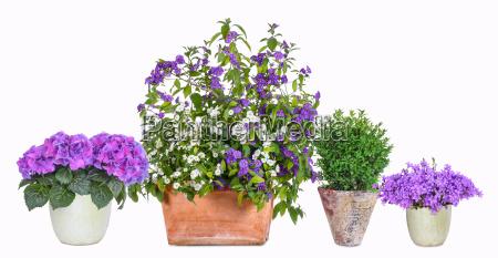 diferentes vasos de flores