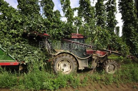fruta fruta hop lupulo planta plantas
