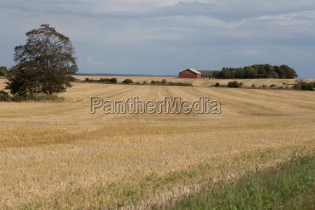 exploracao agricola no campo de milho