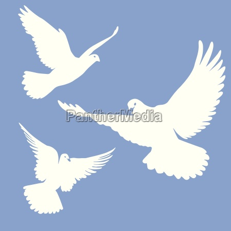 pombos brancos voadores