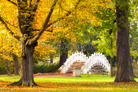 sunny autumn day in the park