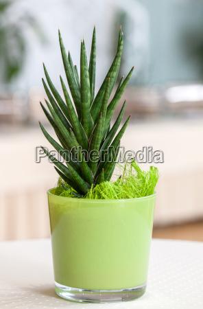 houseplant pequeno na luz potenciometro de