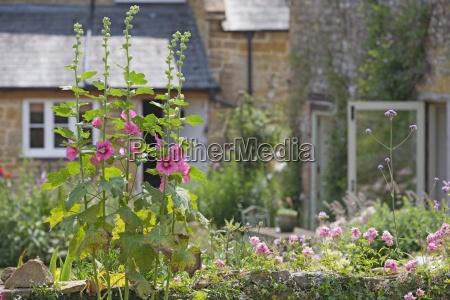blumen wachsen in schoene cottage garden