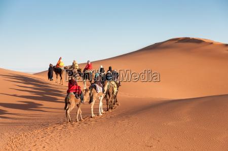 caravana do camelo com os turistas