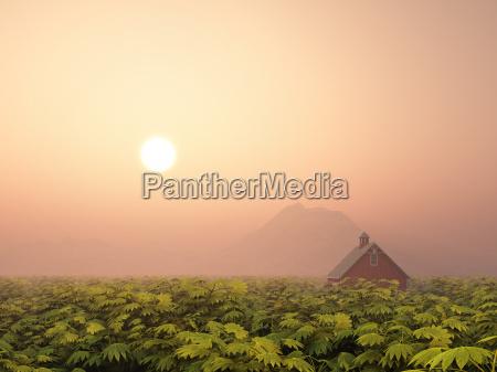 casa construcao agricultura fazenda paisagem natureza