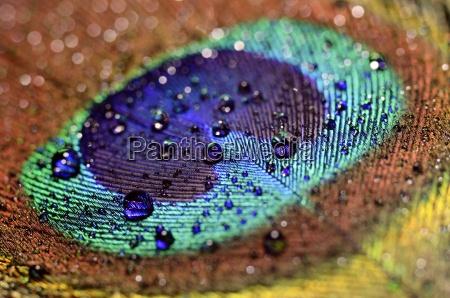 azul acordo close up detalhe liquido