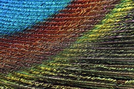 azul acordo close up detalhe cor