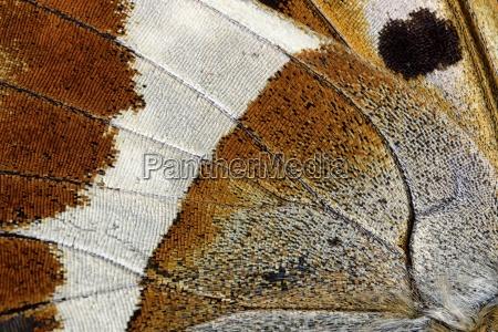 close up detalhe cor closeup otimas