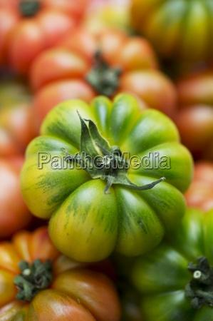 primer plano interior verde rojizo vegetal