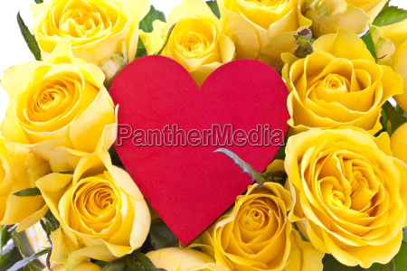 rosas amarelas frescas
