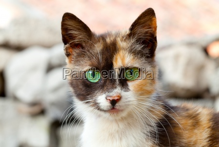 gato com olhos verdes