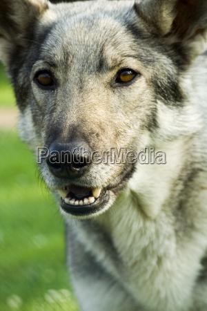 perigo animal animal de estimacao mamifero