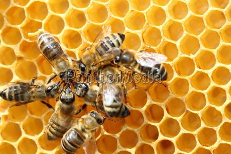 varios colecionadores de mel