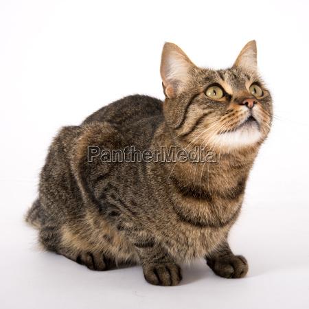 animal animal de estimacao cacador gato
