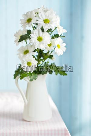 margarida de crisantemo