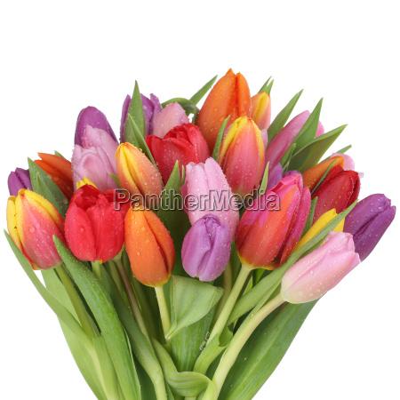 ramalhete com as flores dos tulips