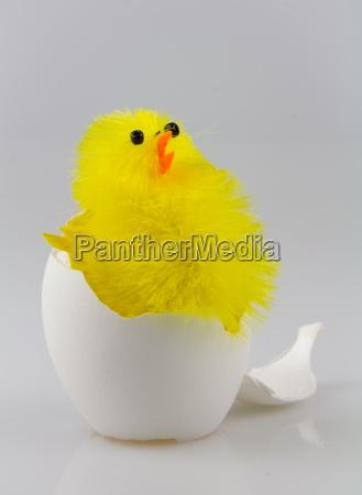 filhotes em casca de ovo