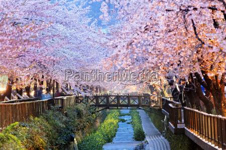 azul famoso arvore parque flor planta