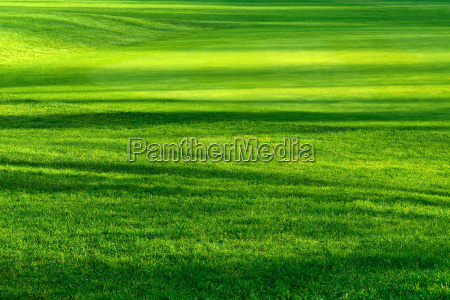 luz e sombra no belo gramado